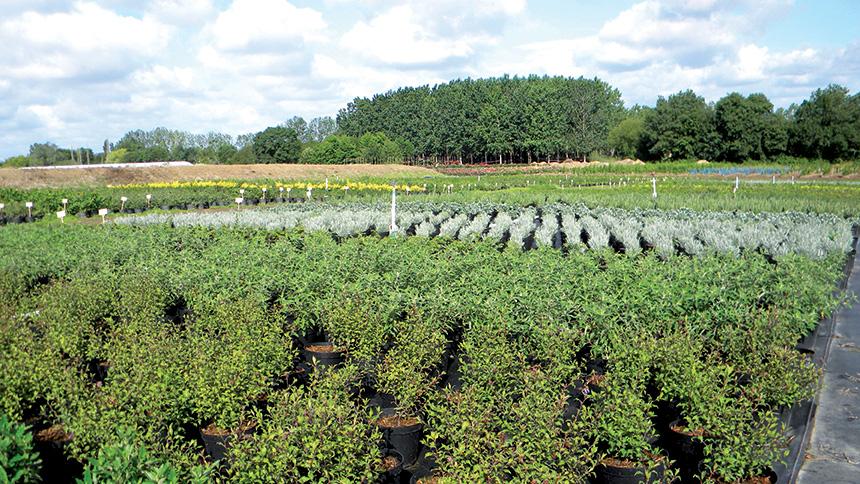 arbustes à l'exterieur de la pépinières ripoche 44
