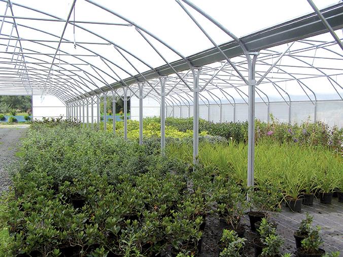 arbustes sous abri pépinières ripoche 44