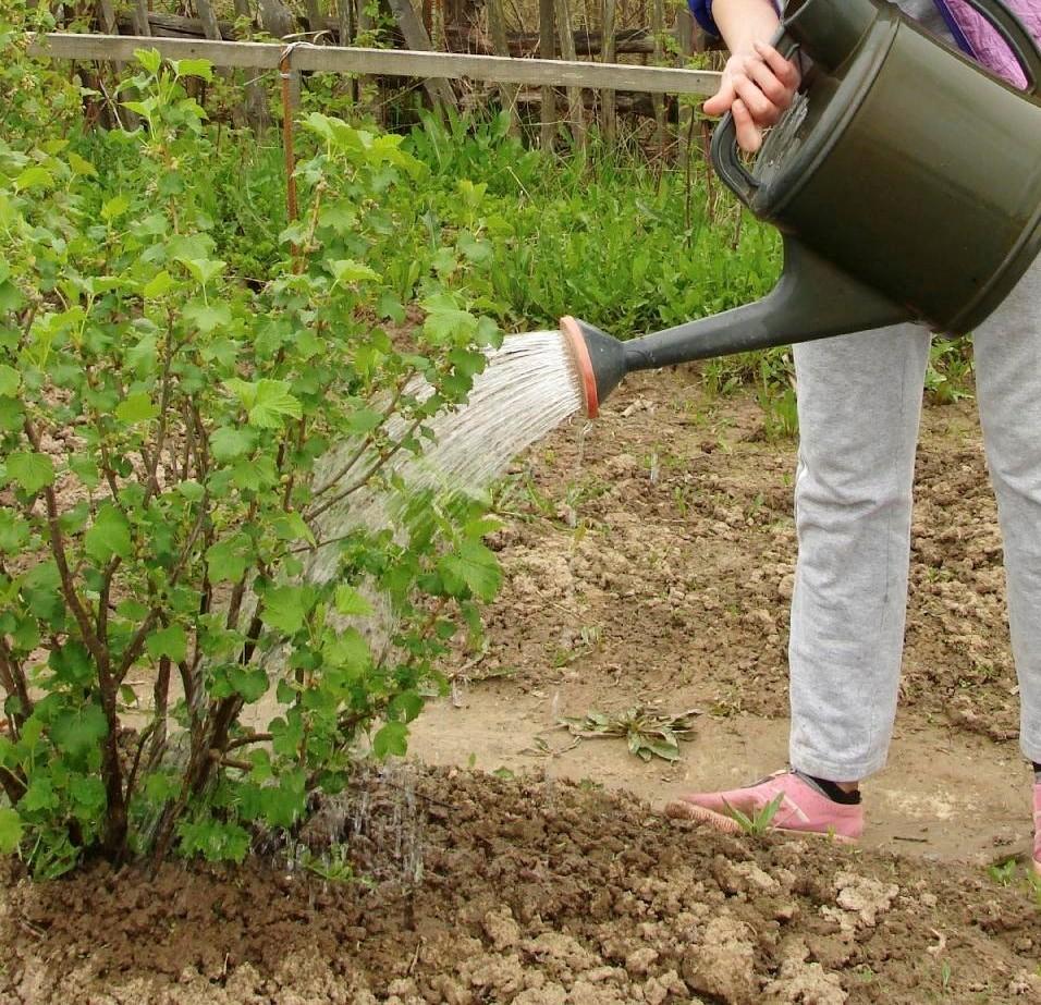 Pensez à arroser vos plantations