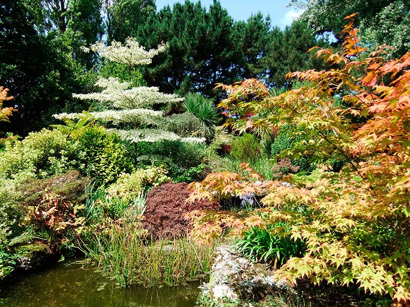 Arbuste japonais plante pour jardin japonais elegant - Plantes jardin japonais ...