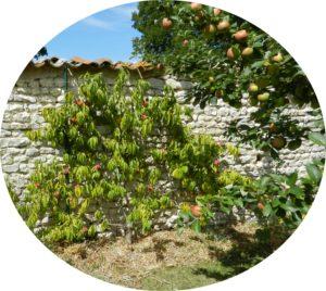 Pépinière Ripoche la chapelle basse mer 44 Jardins gourmands