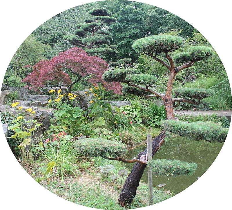 Pépinière Ripoche la chapelle basse mer près de Nantes jardin japonais