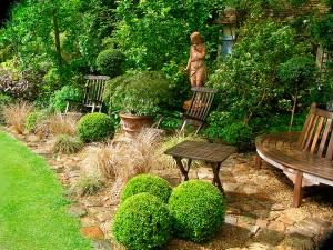 Buxus boule et Carex