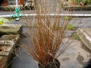 jardins tendances Gra-Carex