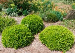 arbustes jardins contemporains pépiniere ripoche la chapelle basse mer