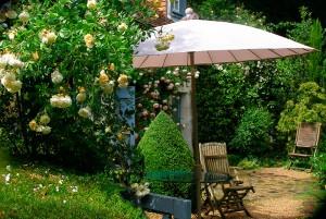 rosier et aménagement jardins à l'anglaise