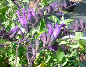 fleurs jardins à l'anglaise, tendance pépinière près de nantes