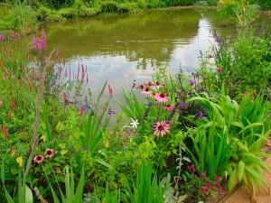 eau jardins-tendances par les pépinières ripoche