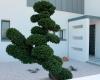 idées jardins contemporains pépinieres ripoche pépiniéristes la chapelle basse mer
