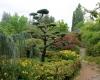 idées jardins japonais ripoche pépiniéristes la chapelle basse mer