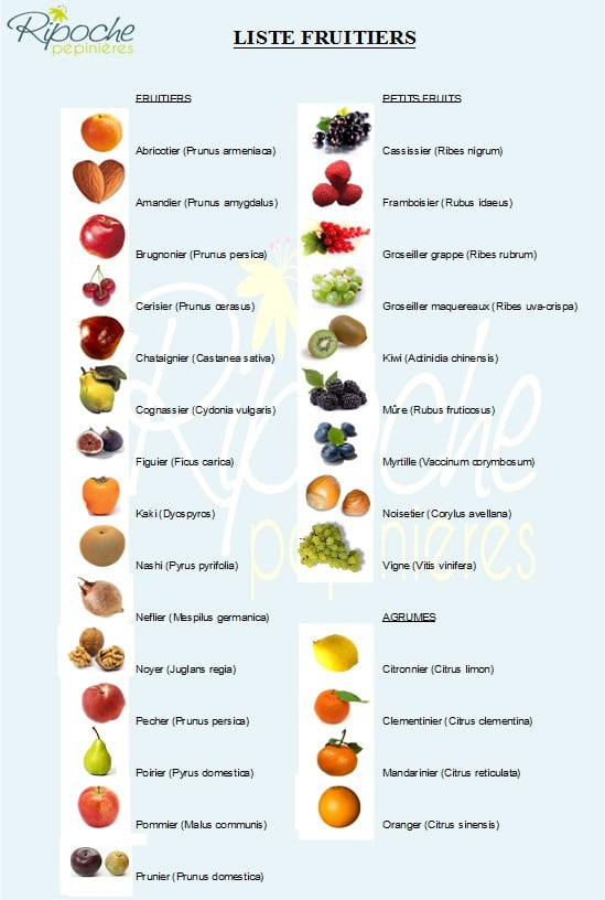 Liste Fruitiers