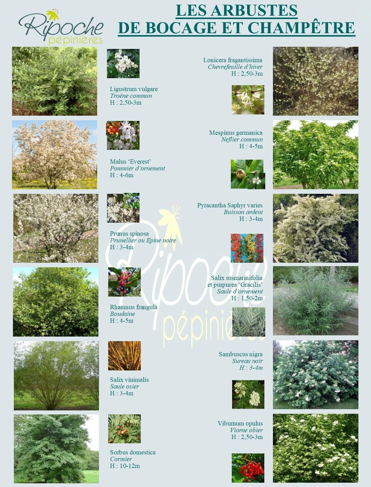 Arbustes de bocage et champêtres2