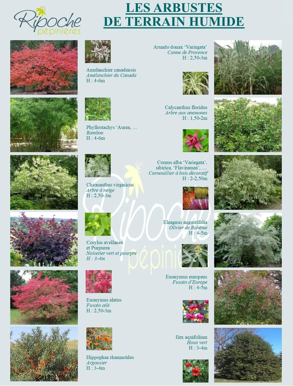 Arbustes de terrain humide1
