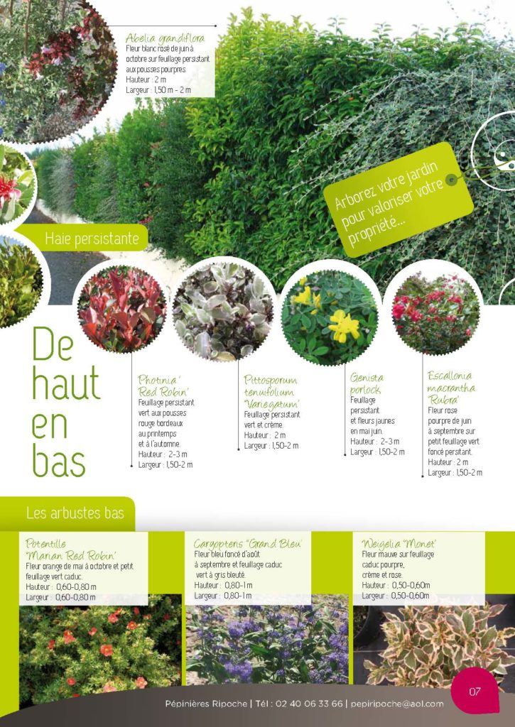 https://www.pepinieres-ripoche.fr/wp-content/uploads/2021/01/Catalogue-particuliers-2011_BD-pdf_Page_07-725x1024.jpg