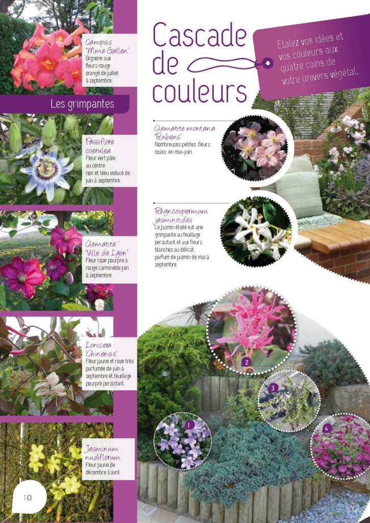https://www.pepinieres-ripoche.fr/wp-content/uploads/2021/01/Catalogue-particuliers-2011_BD-pdf_Page_10-725x1024.jpg