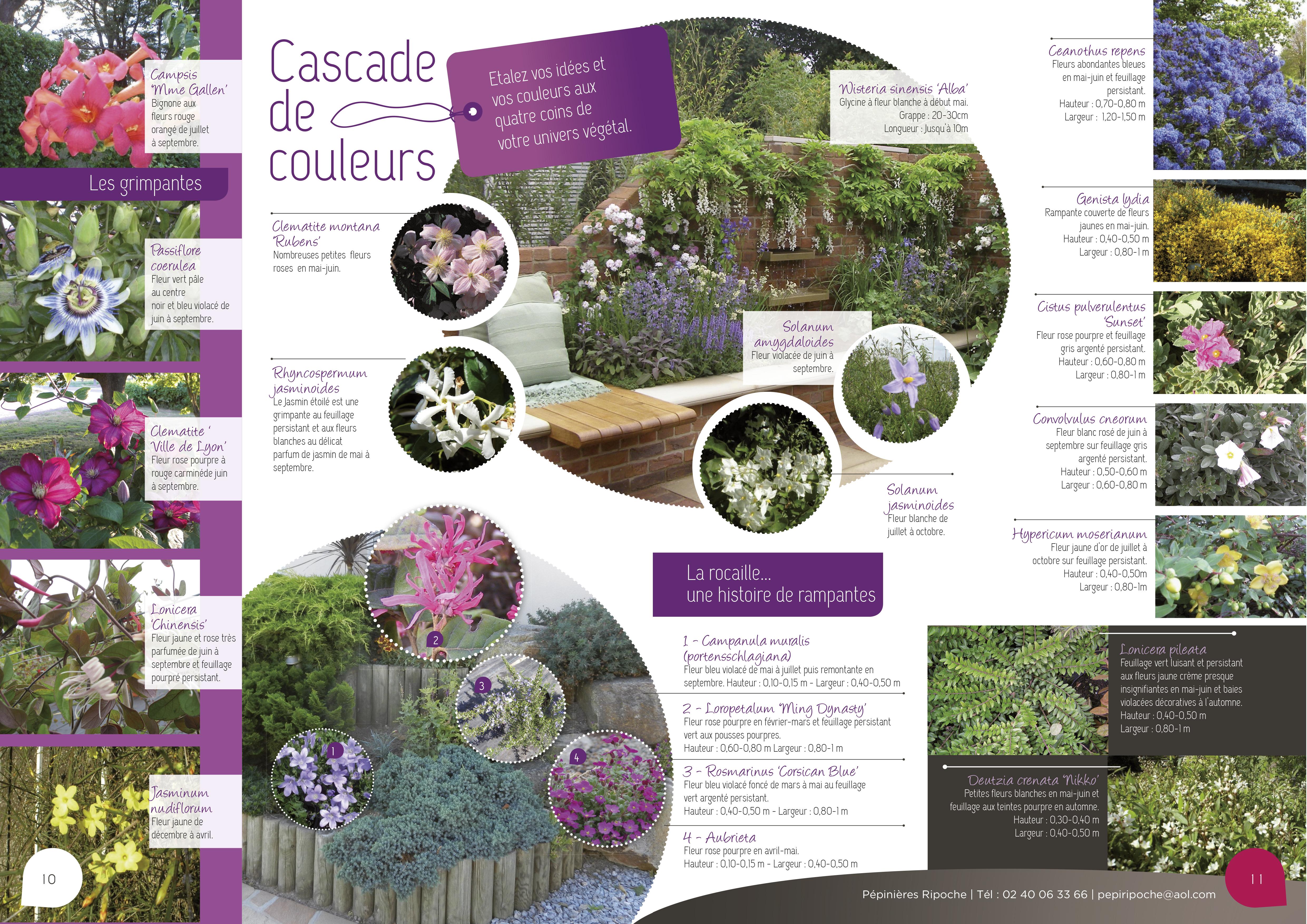 Cascade de couleurs, Plantes grimpantes, Arbustes couvre-sol et Vivaces tapissantes