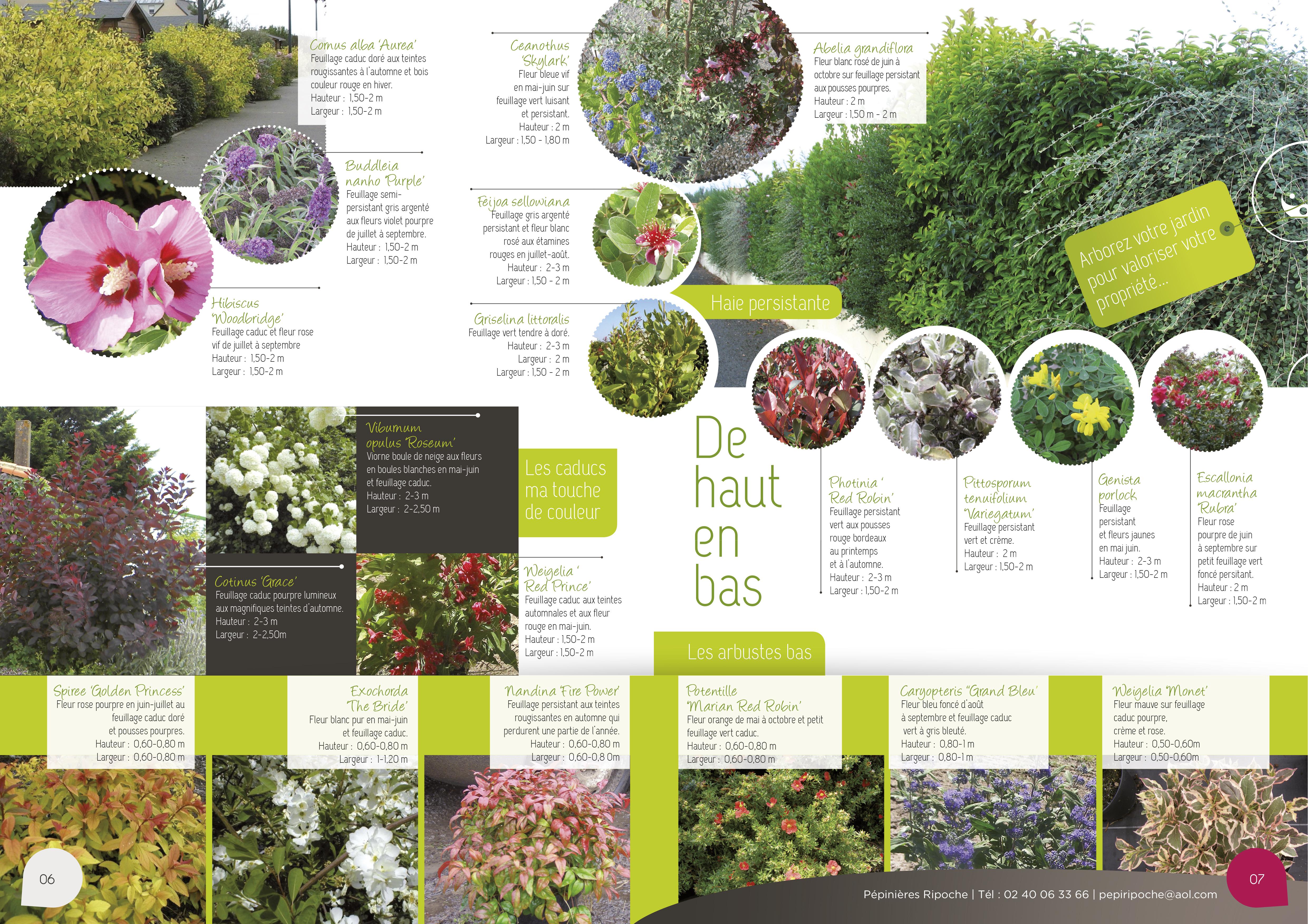 De haut en bas, Arbustes d'ornement persistants et caducs