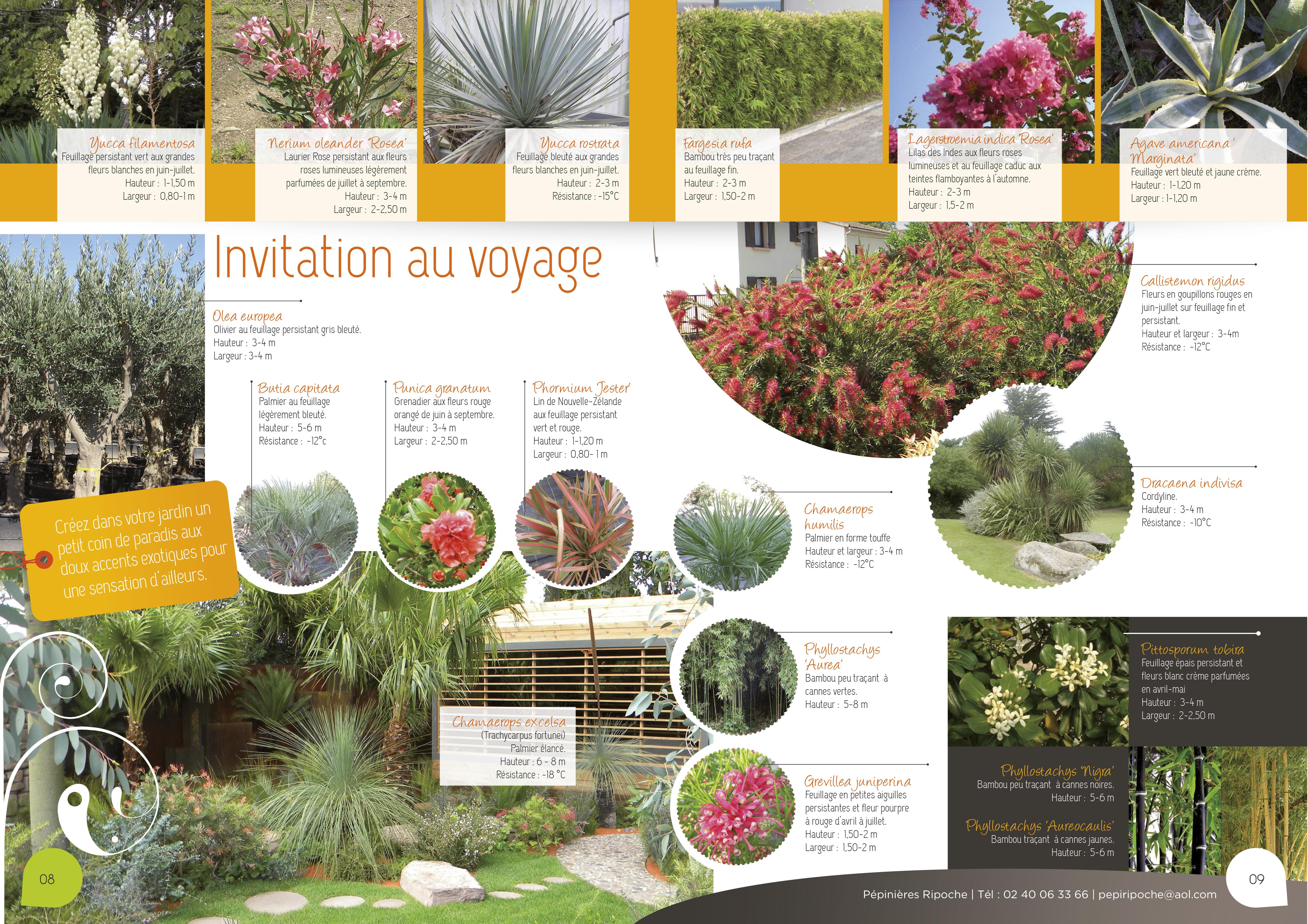 Invitation au voyage, Plantes exotiques, Oliviers, Palmiers et Bambous
