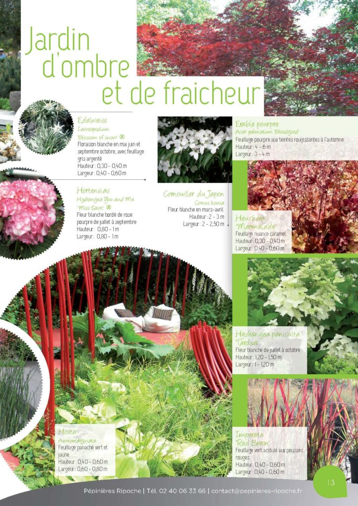 https://www.pepinieres-ripoche.fr/wp-content/uploads/2021/01/Catalogue-particuliers-Ripoche-2018-BD.pdf_Page_13-724x1024.jpg