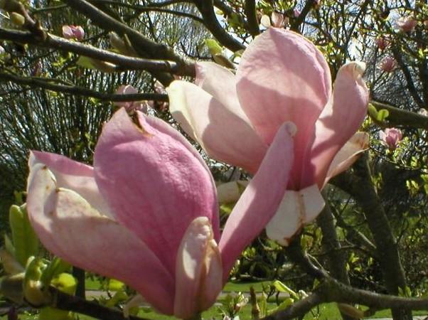 Ouvert pour fêter le printemps